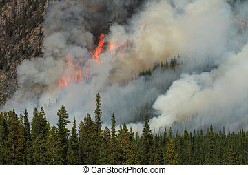 Forest Fire in the Rocky Mountains 15 - Huge flames burning...