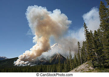 Forest fire in the Rocky Mountains