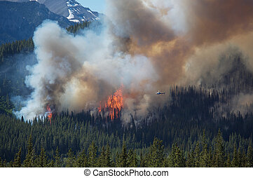 Large forest fire with smoke plume burning in the Rocky Mountains