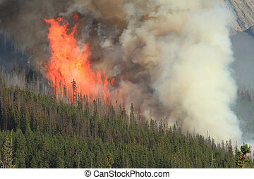 Forest Fire in the Rocky Mountains - Huge flames burning...