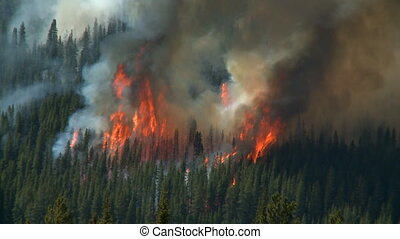 Forest Fire - Large flames and smoke of a forest fire in the...