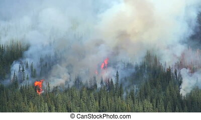 Forest Fire - Large forest fire in the Rocky Mountains