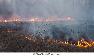Forest fire - Many smoke from forest and grass fire, burning...