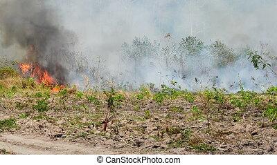 Forest Fire near the agricultural farm