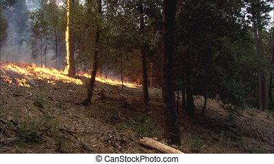 Forest Fire Pan - A wide shot of a forest that is on fire...