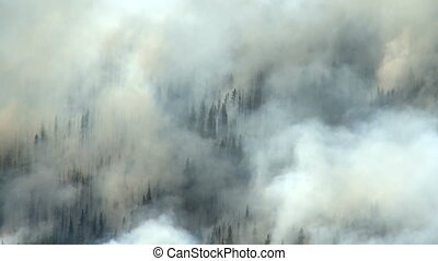 Forest Fire - Smoke of a forest fire in the Rocky Mountains