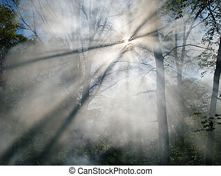 Forest Fire Smoke - Smoke from a forest fire rises through...