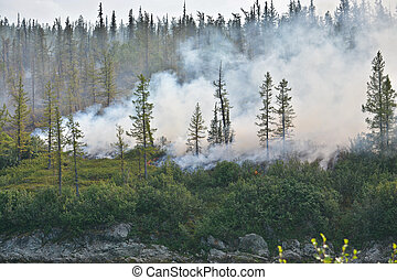 Forest fire. Taiga of the Polar Urals in smoke and flame.