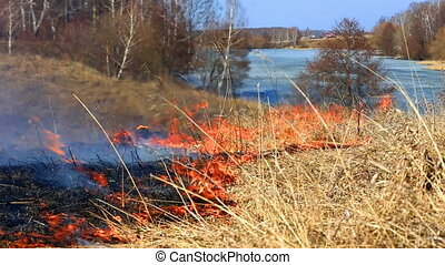 Forest fire: the burning last year's dry grass against the...