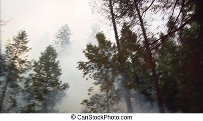 Forest Fire Tilt Down And Pan 2 - Low angle tilt of forest...