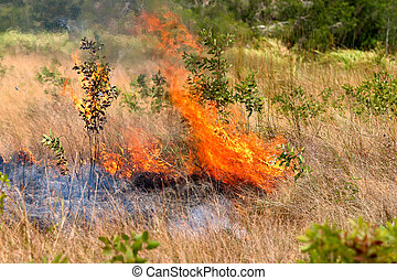 Forest fires in the daytime. - Forest fires in the daytime :...