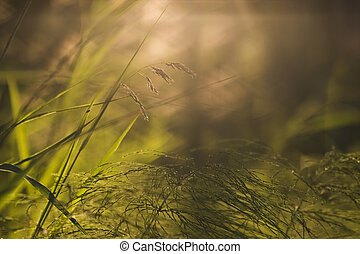 Looking in the sun through plants found of the bottom of the forest.