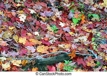 Fall colors on the forest floor