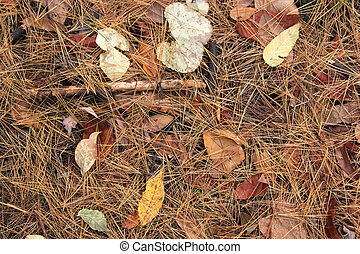 Forest floor in fall with colorful leaves and pine needles