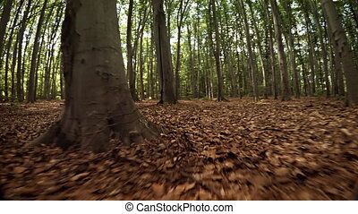 Forest Floor from the Perspective of a Small, Wild Animal -...