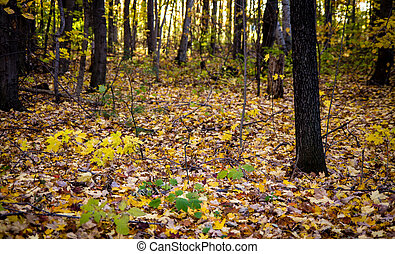 Forest Floor In Autumn