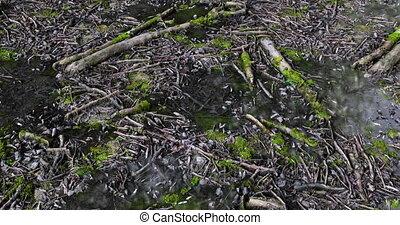 Forest Floor Loop - Forest floor background loop footage