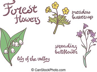 Forest flowers set.