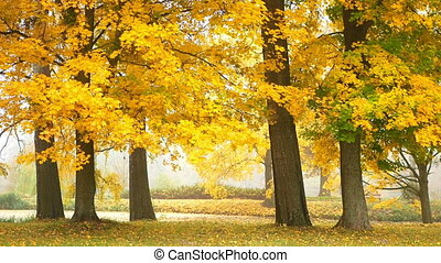 Forest fog nature park - Golden sun fog park forest