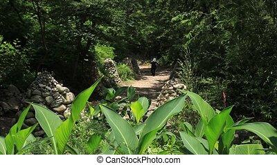 forest - jinhae