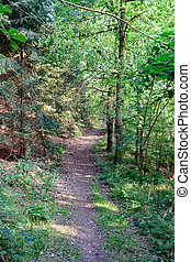 Forest footpath in summer II
