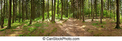 forest - Forest panorama, spring time
