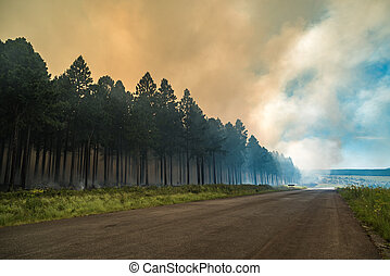 forest., fuoco, wildfire