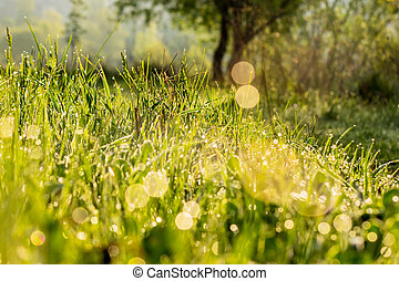 forest glade in morning sun light - close-up of wet grass on...