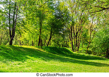 forest glade in shade of the trees - forest glade with...