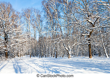 forest glade in sunny winter day