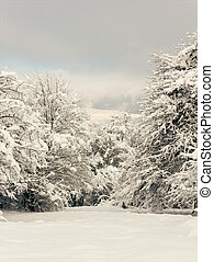 forest glade in the snow, winter landscape