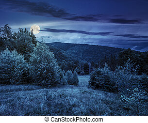 forest glade on hillside at night