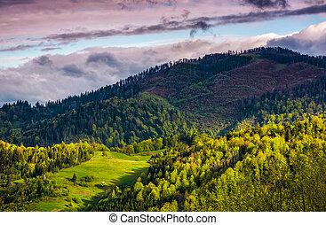 forest glade on mountain hillside in cloudy weather - Forest...