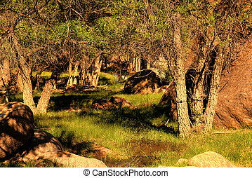 Forest Glen - Northern Arizona Forest Glen with natural...