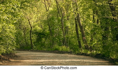 Forest Gravel Road at Twilight - Forest gravel road at...