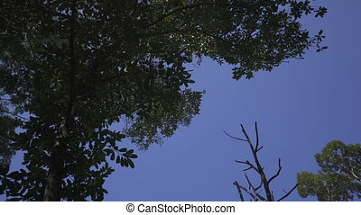 Forest green leaves trees over blue sky background