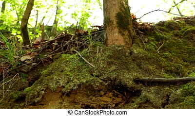 Forest green moss nature - Sunny forest ground in early...