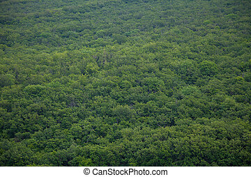 forest green mountains nature