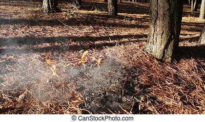 forest ground fire under pine tree