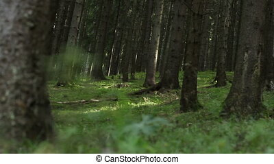 Forest Ground Vegetation - Ground shot of plants and...