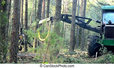 Forest Harvester in action - cutting down tree. A...