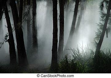 forest haze - white thick mist in dark forest, photo taken...