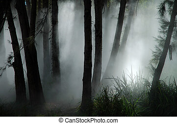 forest haze - white thick mist in dark forest, photo taken...