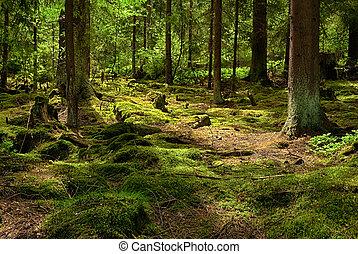 forest-hdr, urzeitlich