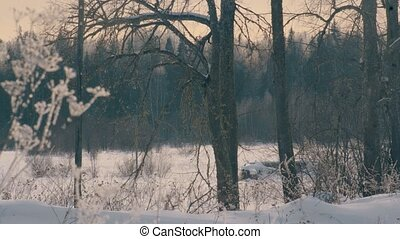 forest., herbe, hoarfrost., marge