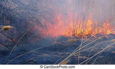 forest., herbe, lent, brûler, sec, wildfire., motion., brûlé, reeds., arbres