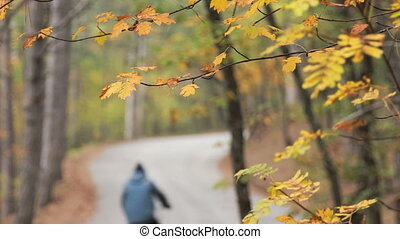 forest highway in the fall