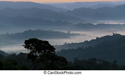 Forest Hills and Sunrise - Handheld, tilting up, extreme...