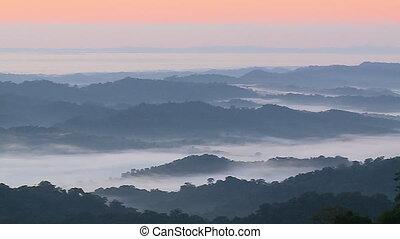 Forest Hills in Mist and Fog - Handheld, panning, wide shot...