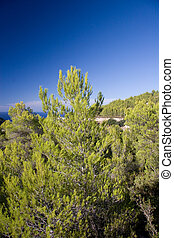 Forest Hills of the Ibiza, Spain